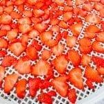 Verse aardbeien op een voedseldroger tray